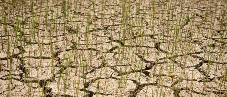 Article : COP 26 pour 2021 : un report qui ne rassure pas